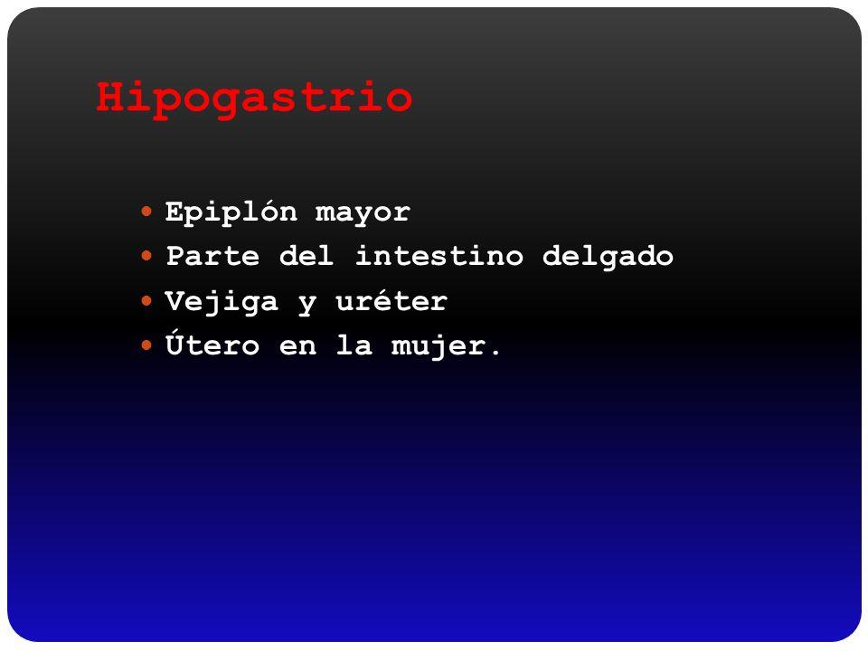 Hipogastrio Epiplón mayor Parte del intestino delgado Vejiga y uréter Útero en la mujer.