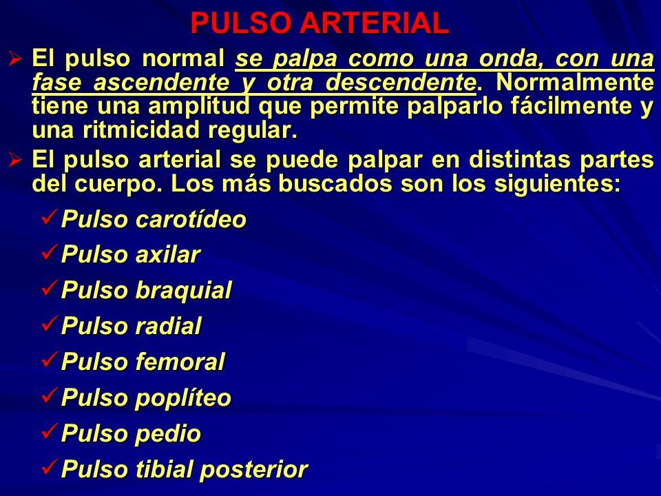 PULSO ARTERIAL El pulso normal se palpa como una onda, con una fase ascendente y otra descendente. Normalmente tiene una amplitud que permite palparlo