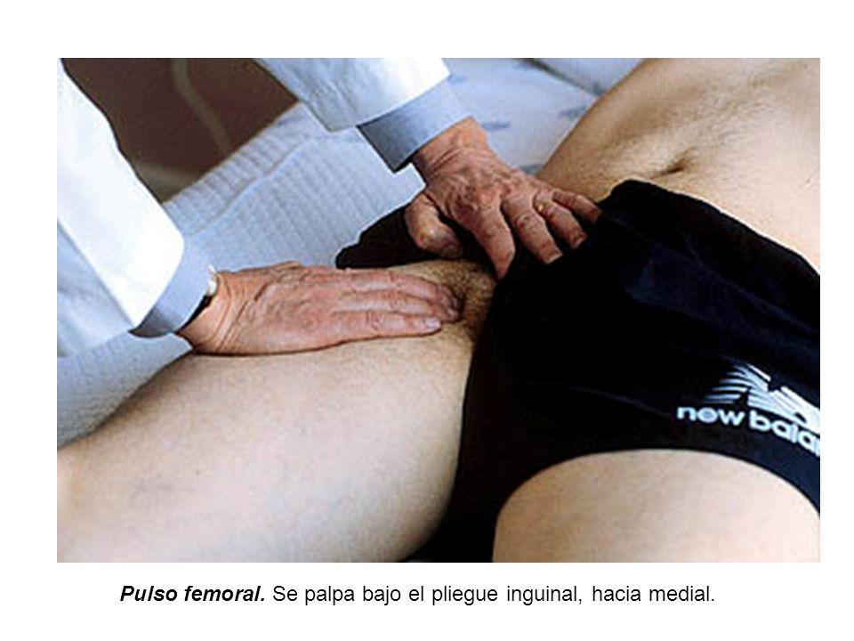 Pulso femoral. Se palpa bajo el pliegue inguinal, hacia medial.