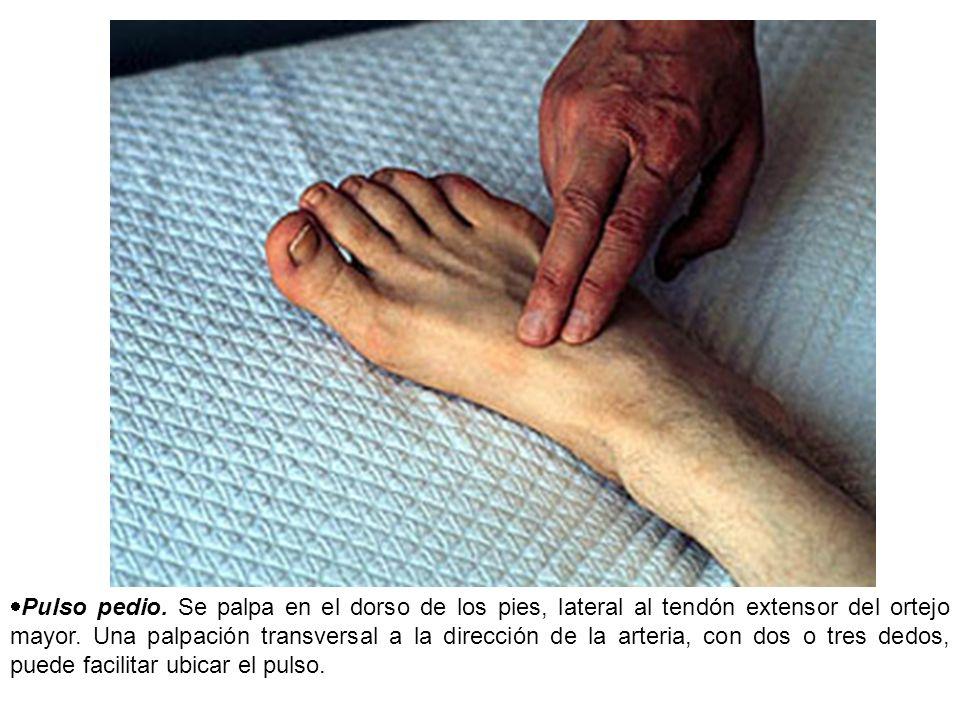 Pulso pedio. Se palpa en el dorso de los pies, lateral al tendón extensor del ortejo mayor. Una palpación transversal a la dirección de la arteria, co