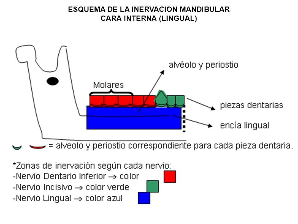 ESQUEMA DE LA INERVACION MANDIBULAR CARA INTERNA (LINGUAL)
