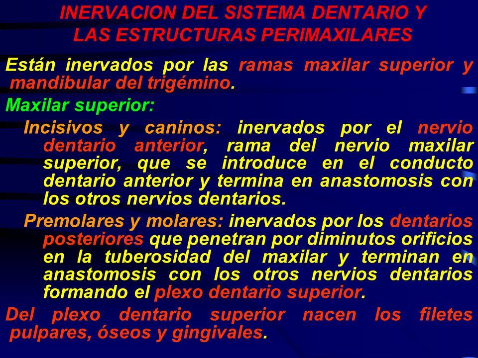 INERVACION DEL SISTEMA DENTARIO Y LAS ESTRUCTURAS PERIMAXILARES Están inervados por las ramas maxilar superior y mandibular del trigémino. Maxilar sup