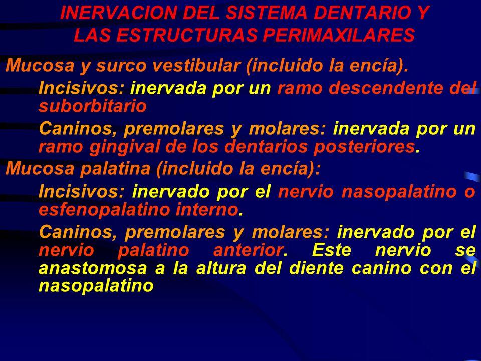 INERVACION DEL SISTEMA DENTARIO Y LAS ESTRUCTURAS PERIMAXILARES Mucosa y surco vestibular (incluido la encía). Incisivos: inervada por un ramo descend