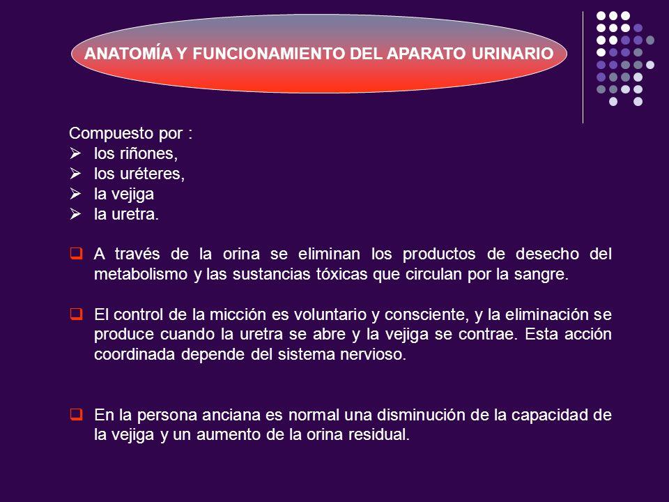 Compuesto por : los riñones, los uréteres, la vejiga la uretra. A través de la orina se eliminan los productos de desecho del metabolismo y las sustan