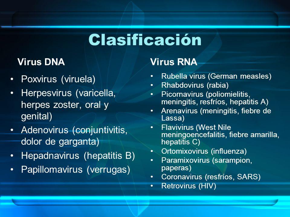 Clasificación Virus DNA Poxvirus (viruela) Herpesvirus (varicella, herpes zoster, oral y genital) Adenovirus (conjuntivitis, dolor de garganta) Hepadn