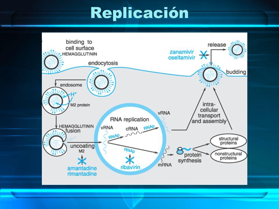 Transmisión Vía aérea: ej.virus de la influenza Vía alimentos o agua: ej.