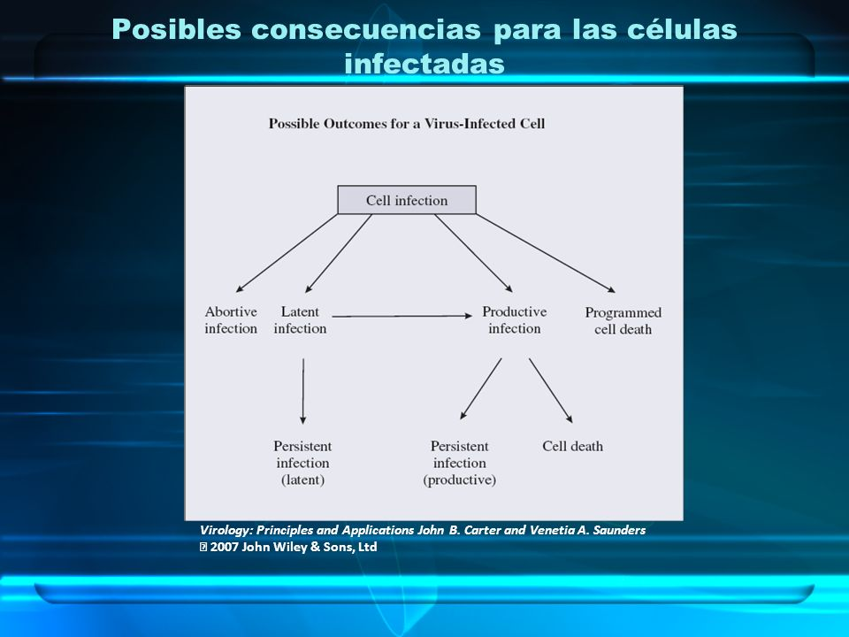 Posibles consecuencias para las células infectadas Virology: Principles and Applications John B. Carter and Venetia A. Saunders 2007 John Wiley & Sons
