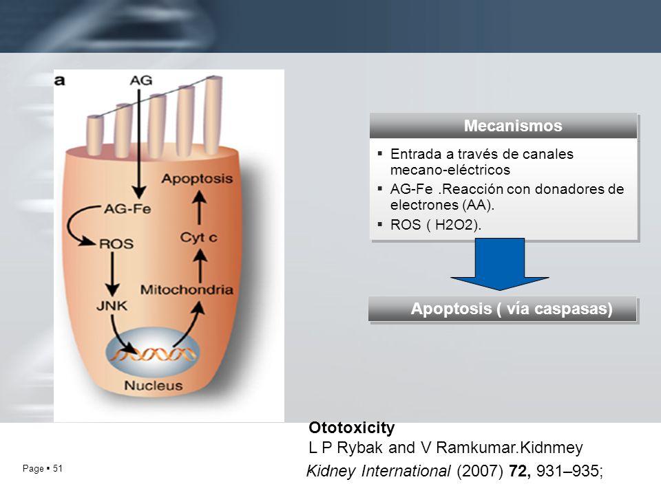 Page 51 Ototoxicity L P Rybak and V Ramkumar.Kidnmey. Kidney International (2007) 72, 931–935; Mecanismos Entrada a través de canales mecano-eléctrico
