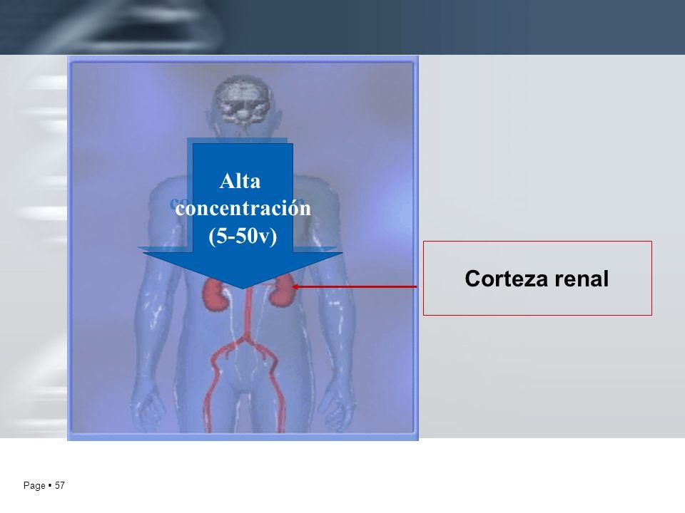 Page 57 Corteza renal Alta concentración (5-50v) Alta concentración (5-50v)