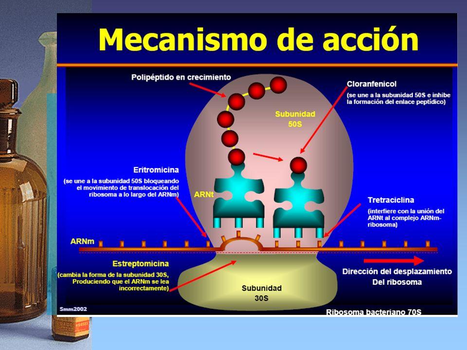 Macrólidos Mecanismo de acción
