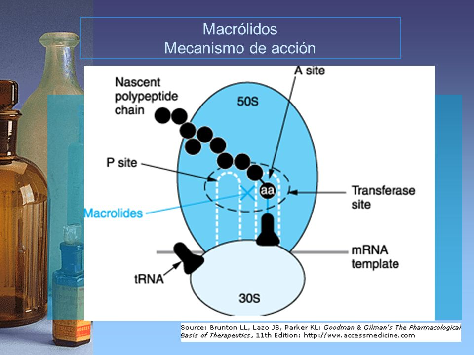 Aspectos y mecanismos de acumulación de azitromicina y de macrólidos en las células fagocíticas * Reversible *Dependiente de la temperatura *Dependiente del pH sobre el rango fisiológico *La concentración intracelular directamente relacionada con la concentración extracelular.