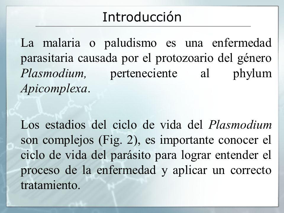 Introducción La malaria o paludismo es una enfermedad parasitaria causada por el protozoario del género Plasmodium, perteneciente al phylum Apicomplex