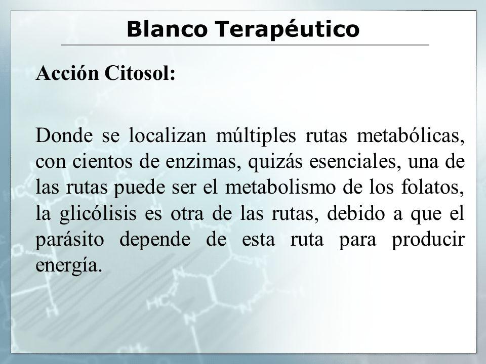 Blanco Terapéutico Acción Citosol: Donde se localizan múltiples rutas metabólicas, con cientos de enzimas, quizás esenciales, una de las rutas puede s