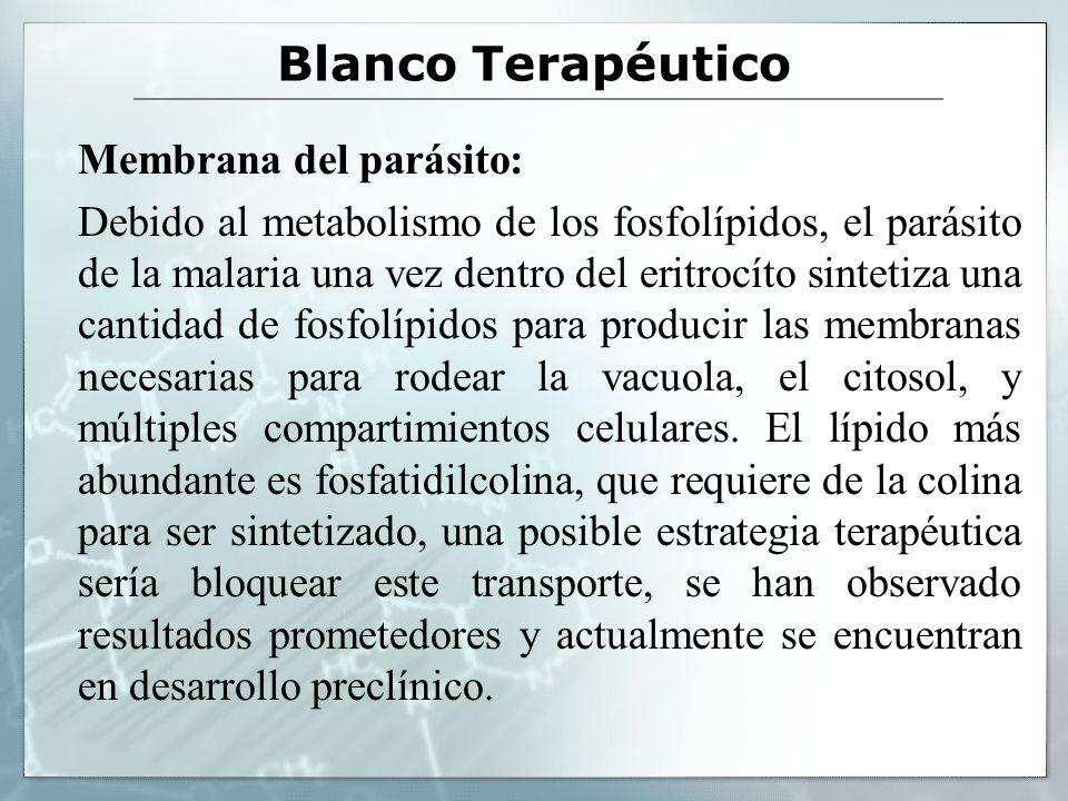 Blanco Terapéutico Membrana del parásito: Debido al metabolismo de los fosfolípidos, el parásito de la malaria una vez dentro del eritrocíto sintetiza