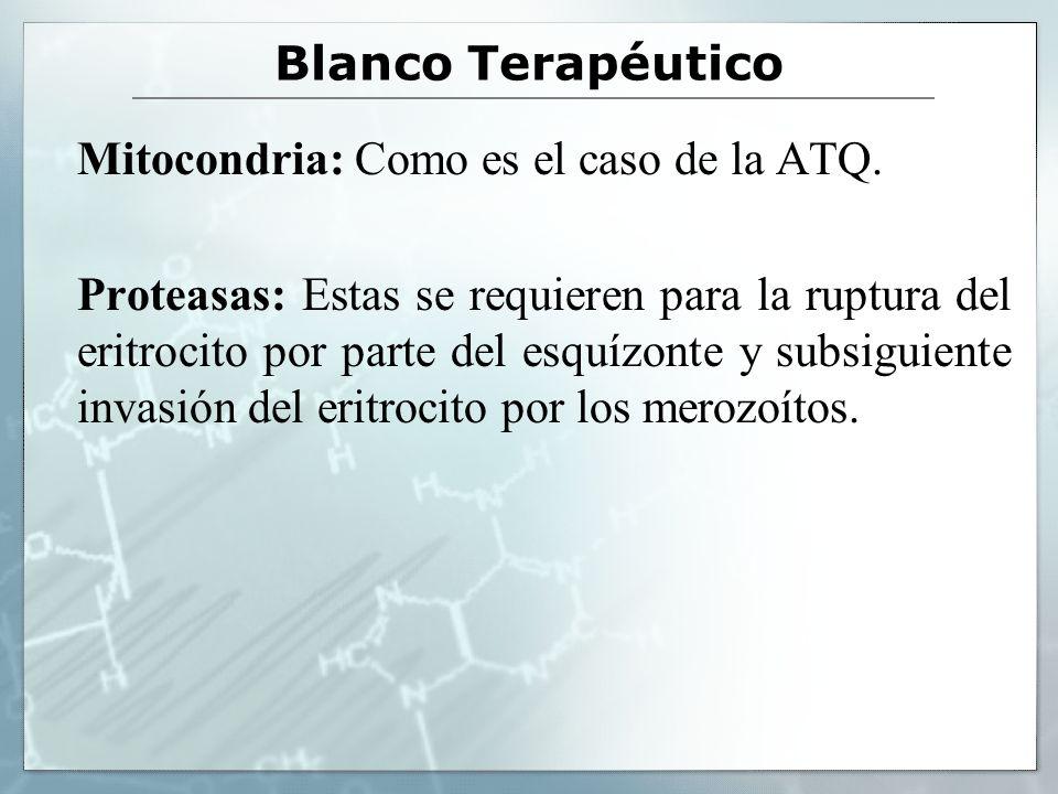 Blanco Terapéutico Mitocondria: Como es el caso de la ATQ. Proteasas: Estas se requieren para la ruptura del eritrocito por parte del esquízonte y sub