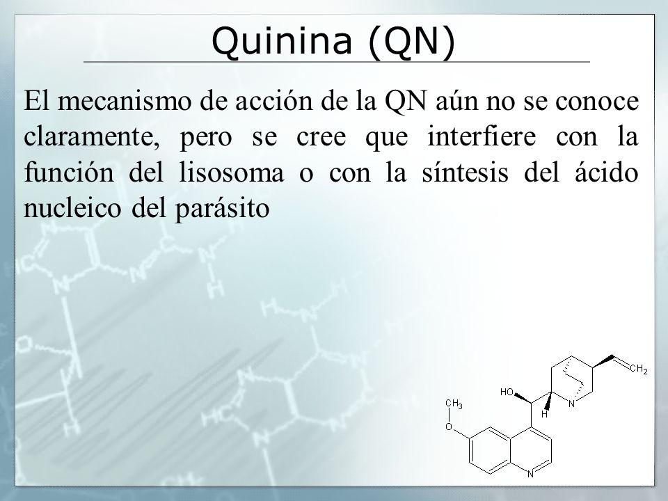 Quinina (QN) El mecanismo de acción de la QN aún no se conoce claramente, pero se cree que interfiere con la función del lisosoma o con la síntesis de