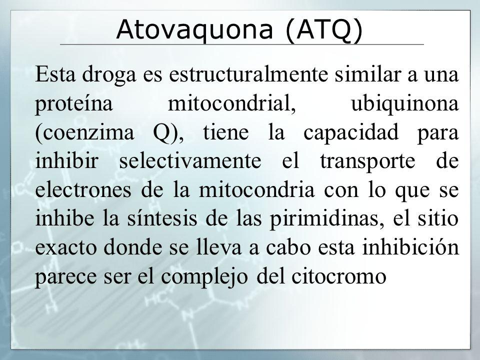 Atovaquona (ATQ) Esta droga es estructuralmente similar a una proteína mitocondrial, ubiquinona (coenzima Q), tiene la capacidad para inhibir selectiv