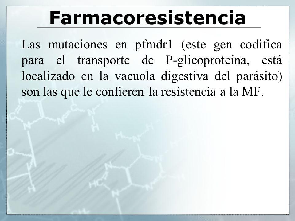 Farmacoresistencia Las mutaciones en pfmdr1 (este gen codifica para el transporte de P-glicoproteína, está localizado en la vacuola digestiva del pará