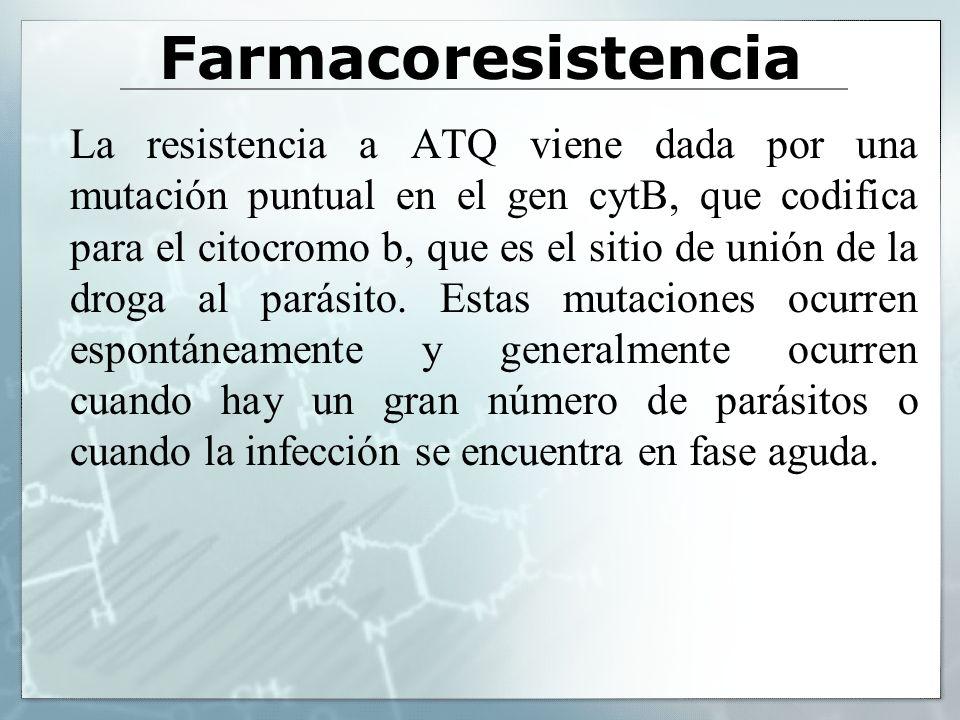 Farmacoresistencia La resistencia a ATQ viene dada por una mutación puntual en el gen cytB, que codifica para el citocromo b, que es el sitio de unión