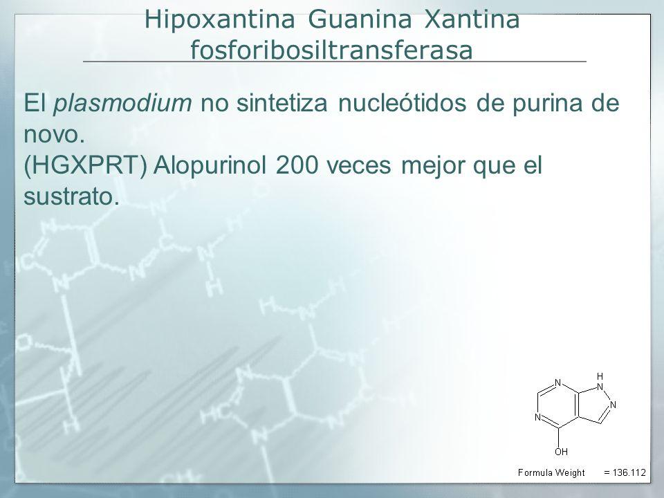 Hipoxantina Guanina Xantina fosforibosiltransferasa El plasmodium no sintetiza nucleótidos de purina de novo. (HGXPRT) Alopurinol 200 veces mejor que