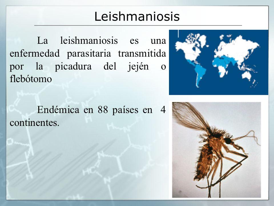 La leishmaniosis es una enfermedad parasitaria transmitida por la picadura del jején o flebótomo Endémica en 88 países en 4 continentes.