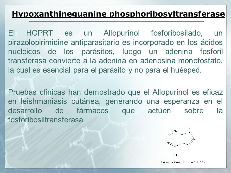 Hypoxanthineguanine phosphoribosyltransferase El HGPRT es un Allopurinol fosforibosilado, un pirazolopirimidine antiparasitario es incorporado en los