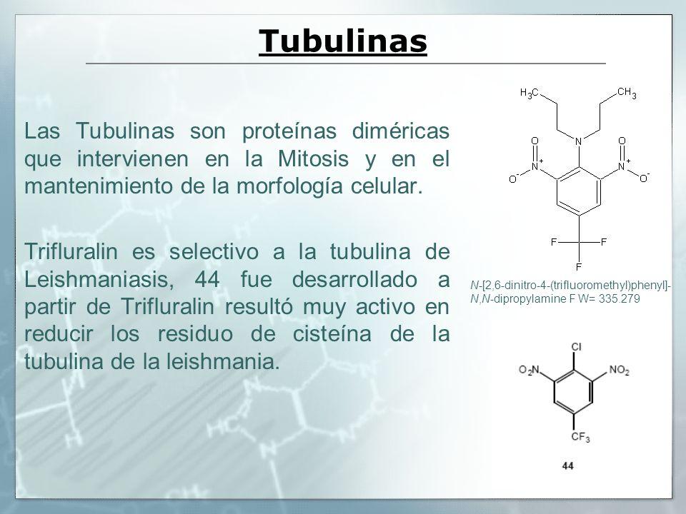 Tubulinas Las Tubulinas son proteínas diméricas que intervienen en la Mitosis y en el mantenimiento de la morfología celular. Trifluralin es selectivo