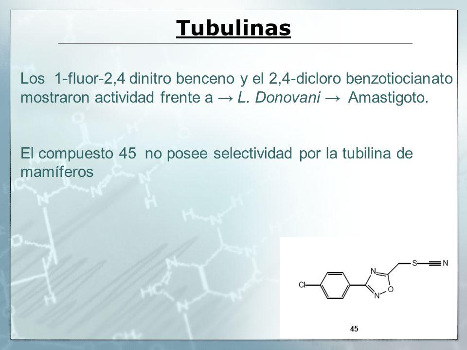 Tubulinas Los 1-fluor-2,4 dinitro benceno y el 2,4-dicloro benzotiocianato mostraron actividad frente a L. Donovani Amastigoto. El compuesto 45 no pos
