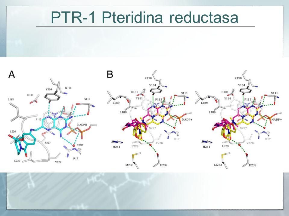PTR-1 Pteridina reductasa