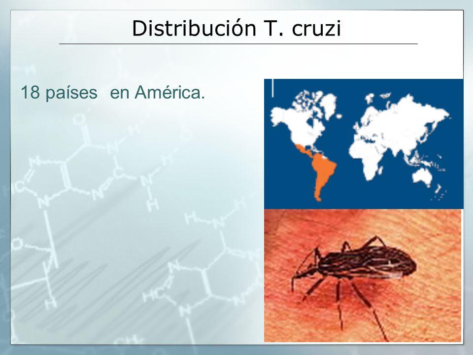 18 países en América. Distribución T. cruzi