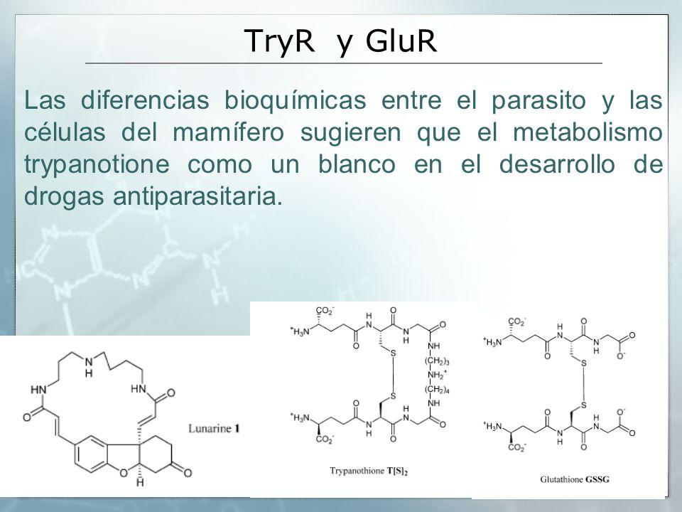 TryR y GluR Las diferencias bioquímicas entre el parasito y las células del mamífero sugieren que el metabolismo trypanotione como un blanco en el des