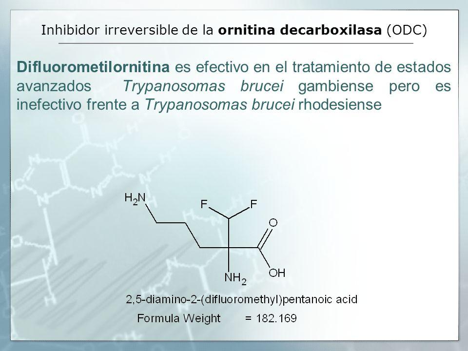 Inhibidor irreversible de la ornitina decarboxilasa (ODC) Difluorometilornitina es efectivo en el tratamiento de estados avanzados Trypanosomas brucei