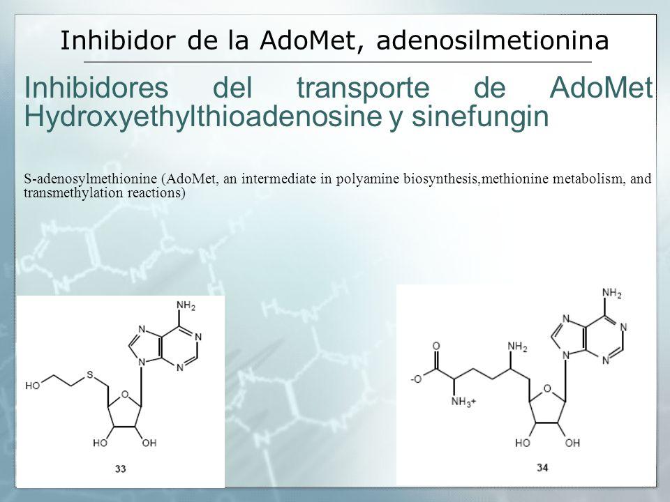 Inhibidor de la AdoMet, adenosilmetionina Inhibidores del transporte de AdoMet Hydroxyethylthioadenosine y sinefungin S-adenosylmethionine (AdoMet, an