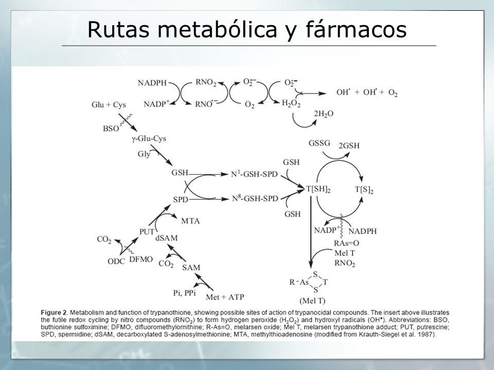 Rutas metabólica y fármacos