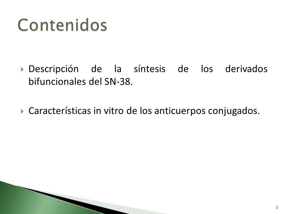 Descripción de la síntesis de los derivados bifuncionales del SN-38. Características in vitro de los anticuerpos conjugados. 3