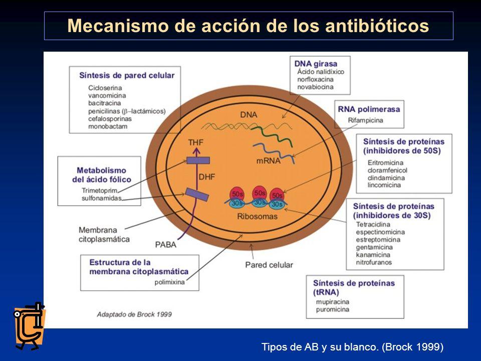 encuentren en división activa y que el antibiótico encuentre su blanco. Tipos de AB y su blanco. (Brock 1999) Mecanismo de acción de los antibióticos