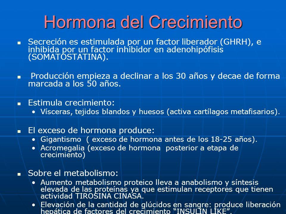 Son factores de crecimiento insulina like.Son factores de crecimiento insulina like.