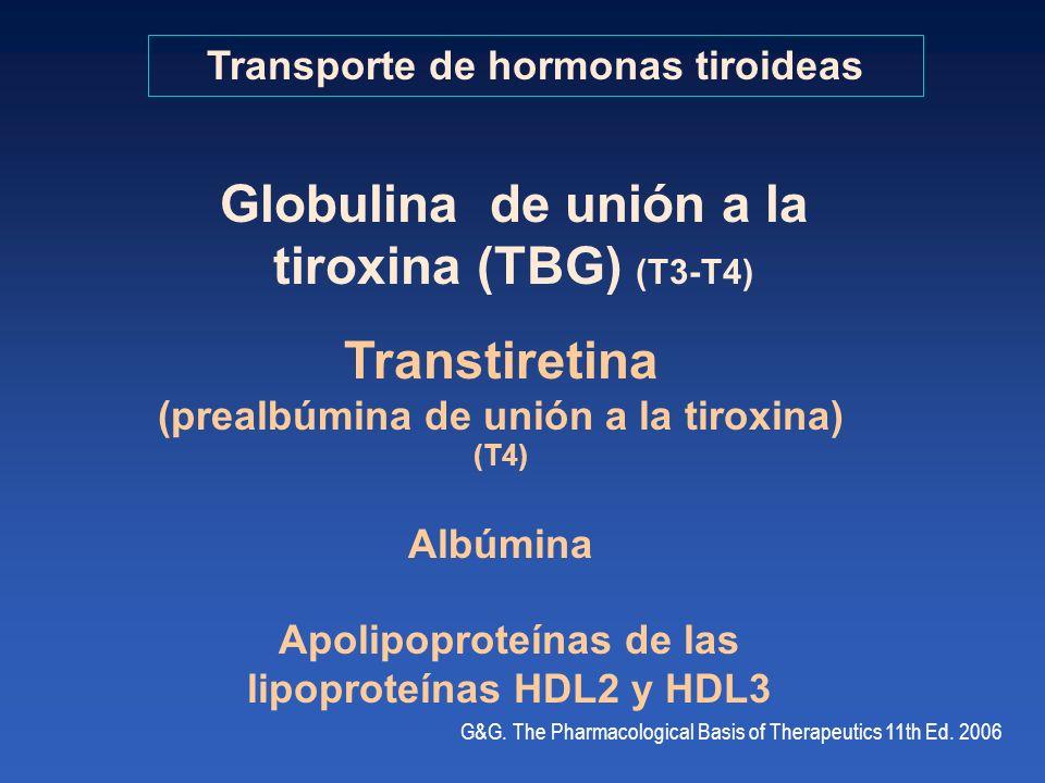 Transporte de hormonas tiroideas Globulina de unión a la tiroxina (TBG) (T3-T4) Albúmina Transtiretina (prealbúmina de unión a la tiroxina) (T4) Apoli