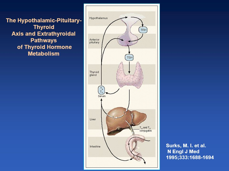 Surks, M. I. et al. N Engl J Med 1995;333:1688-1694 The Hypothalamic-Pituitary- Thyroid Axis and Extrathyroidal Pathways of Thyroid Hormone Metabolism