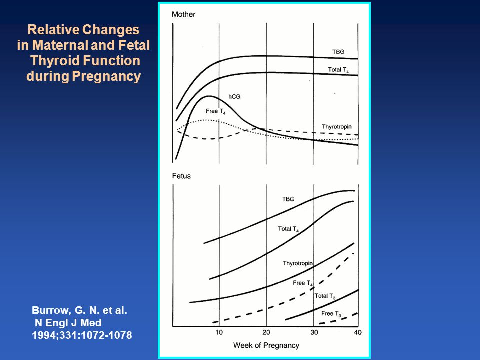 Burrow, G. N. et al. N Engl J Med 1994;331:1072-1078 Relative Changes in Maternal and Fetal Thyroid Function during Pregnancy