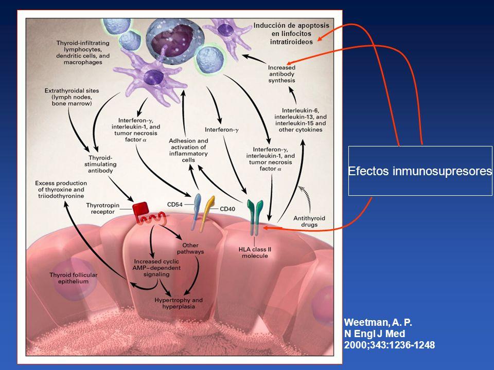 Weetman, A. P. N Engl J Med 2000;343:1236-1248 Efectos inmunosupresores Inducción de apoptosis en linfocitos intratiroideos