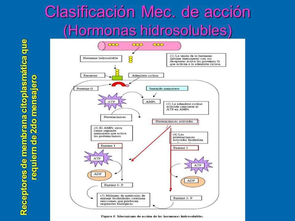 Clasificación Mec. de acción (Hormonas hidrosolubles) Receptores de membrana citoplasmática que requiern de 2do mensajero