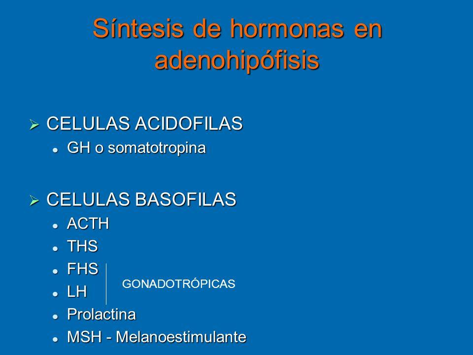 Síntesis de hormonas en adenohipófisis CELULAS ACIDOFILAS CELULAS ACIDOFILAS GH o somatotropina GH o somatotropina CELULAS BASOFILAS CELULAS BASOFILAS