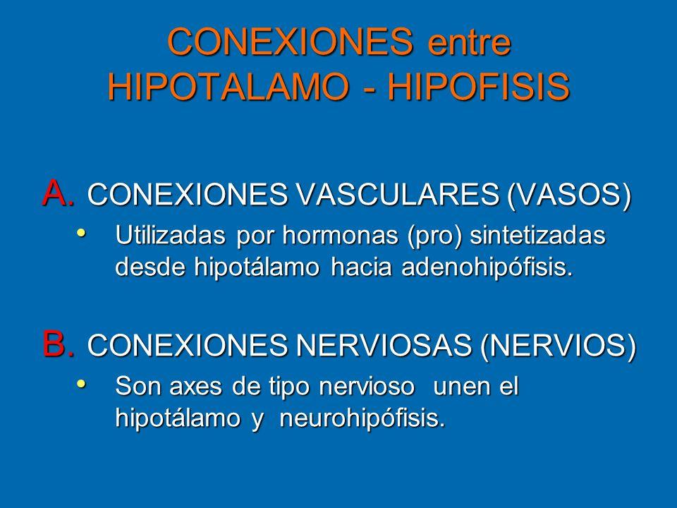 CONEXIONES entre HIPOTALAMO - HIPOFISIS A. CONEXIONES VASCULARES (VASOS) Utilizadas por hormonas (pro) sintetizadas desde hipotálamo hacia adenohipófi