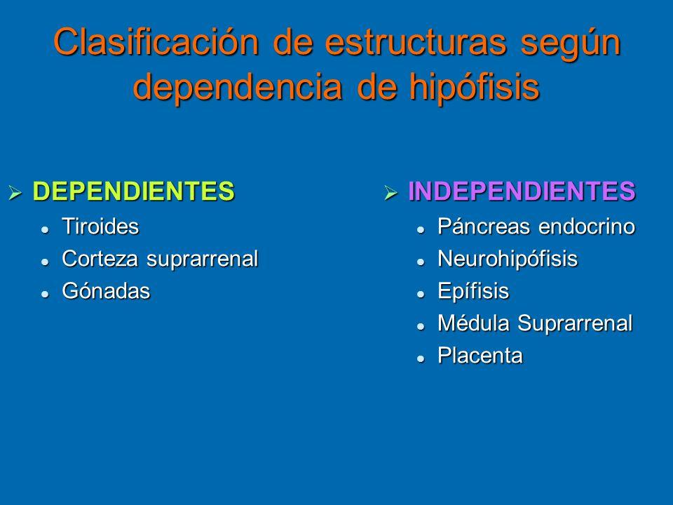 Clasificación de estructuras según dependencia de hipófisis DEPENDIENTES DEPENDIENTES Tiroides Tiroides Corteza suprarrenal Corteza suprarrenal Gónada