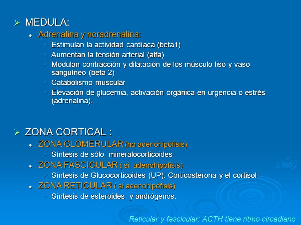 MEDULA: MEDULA: Adrenalina y noradrenalina: Adrenalina y noradrenalina: Estimulan la actividad cardíaca (beta1)Estimulan la actividad cardíaca (beta1)