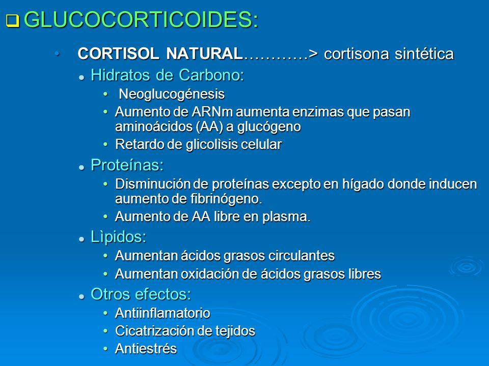 GLUCOCORTICOIDES: GLUCOCORTICOIDES: CORTISOL NATURAL…………> cortisona sintéticaCORTISOL NATURAL…………> cortisona sintética Hidratos de Carbono: Hidratos d