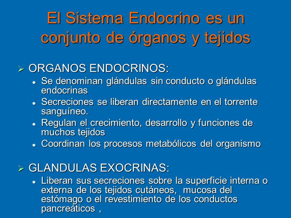 El Sistema Endocrino es un conjunto de órganos y tejidos ORGANOS ENDOCRINOS: ORGANOS ENDOCRINOS: Se denominan glándulas sin conducto o glándulas endoc