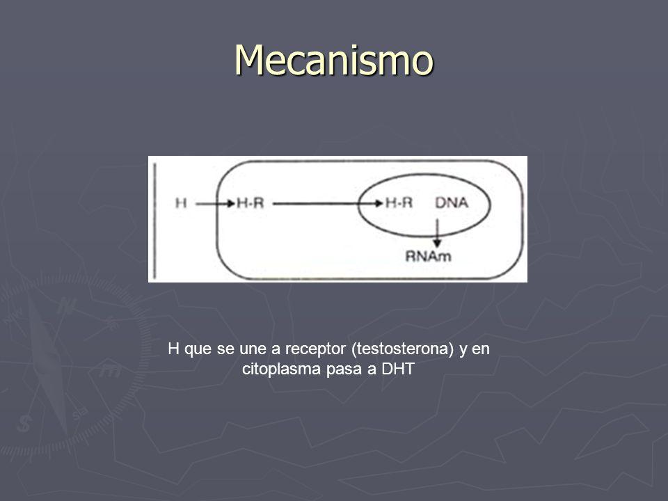 Mecanismo H que se une a receptor (testosterona) y en citoplasma pasa a DHT