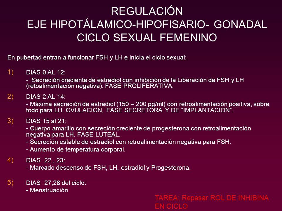 En pubertad entran a funcionar FSH y LH e inicia el ciclo sexual: 1) DIAS 0 AL 12: - Secreción creciente de estradiol con inhibición de la Liberación